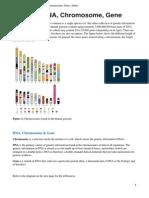 Appendix I - Genome, DNA, Chromosome, Gene, Allele