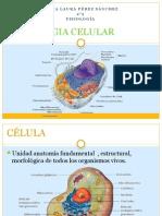 2fisiologia Celular