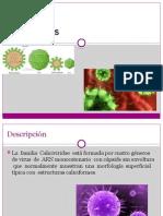 Calcivirus