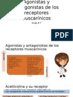 Agonistas y Antagonistas de Los Receptores Muscarínicos (Blanco)