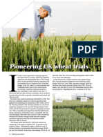 Pioneering UK wheat trials