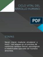 Ciclo Vital Del Desarrollo Humano