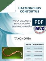 HAEMONCHUS-CONTORTUS