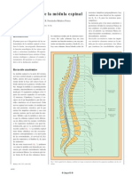 sindromesmedulares-130218194234-phpapp02
