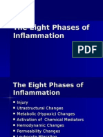 The Eight Phases of Inflammation