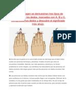 En Esta Imagen Se Demuestran Tres Tipos de Longitudes de Los Dedos