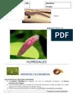 PRACTICO 13 Humedales (Hidrofitas -Platelmintos Hannie Bertalot