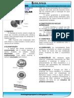 Nucleo Para Imprimir