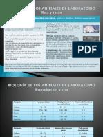 Biologa de Los Animales de Laboratorio