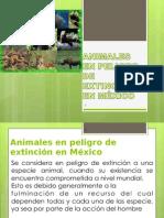 ANIMALES EN PELIGRO DE EXTINCION EN MÉXICO