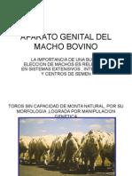 6 Macho Bovino