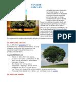 ÁRBOL DE LA QUINA.docx