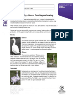 Poultry Husbandry - Geese Breeding and Rearing