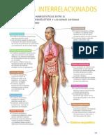 Sistemas Interrelacionados. Musculo Esquelético