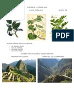 Plantas de La Region Suni