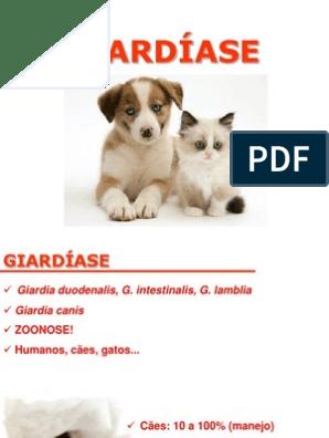 giardia zoonos)