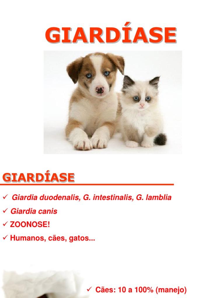 giardia zoonos