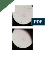 Fotos Microorganismos