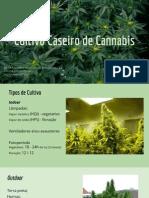 Cultivo Caseiro de Cannabis