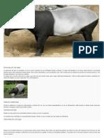 Descripción Del Tapir