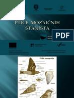 PTICE  MOZAICNIH  STANISTA