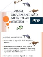 Animal Movement and Muscular System