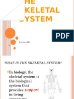 The Skeletal System Ppt