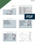 Anatomía y Fisiología del Conejo