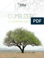 Umbuzeiro e Book