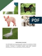 Enfermedades de Animales
