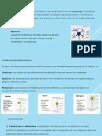 Clase 8 Sistema Nervioso