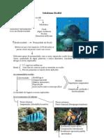 Ictiofauna Recifal - transparências.doc