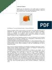 La Vitamina C y Su Uso en El Cáncer