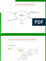 COLESTEROL Lipoproteinas