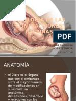 fisiologiadelascontraccionesuterinas-110215171630-phpapp02