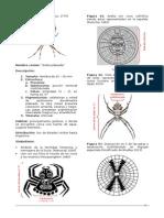 Argiope Argentata (Araneae - Araneidae) en La Iconografia Moche