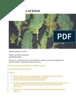 Zaštita Rajčice Od Bolesti