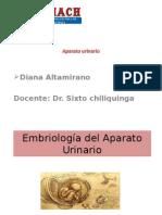 Embriologia Aparato Urinario Diana