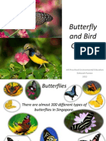 butterfly and bird garden