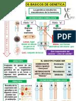Proyecto de Multimedia Genetica