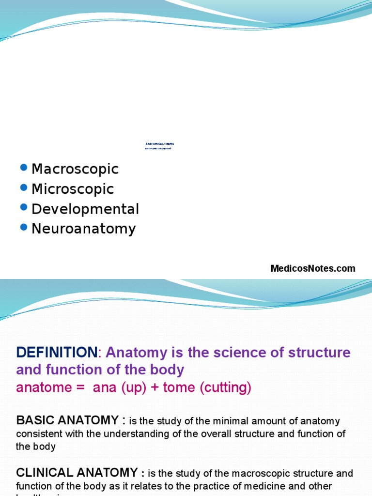 Anatomical Terms Medicosnotes Anatomical Terms Of Motion
