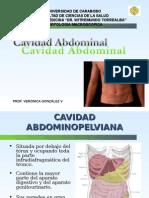 Cavidad Abdominal - Clase de Anatomía