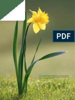 investigacion_y_ciencia_2011.pdf