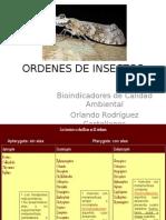 Ordenes de Insectos