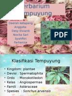 Ppt Herbarium