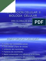 02-ADAPTACION CELULA II