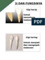 Jenis Gigi Dan Fungsinya