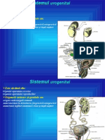 Anatomia omului- Sist. Excretor