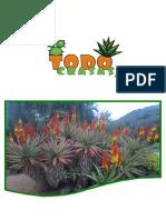 Catalogo plantas Crasas