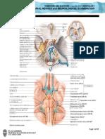 NEUROPrelims - Cranial Nerves and Neurological Examination